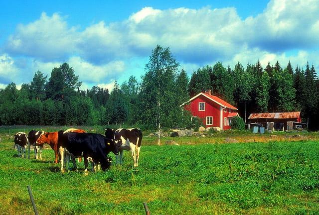 Petite ferme de Dalécarlie