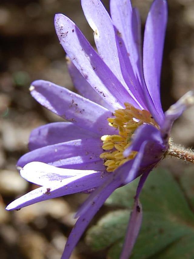 Petite fleur et pistil