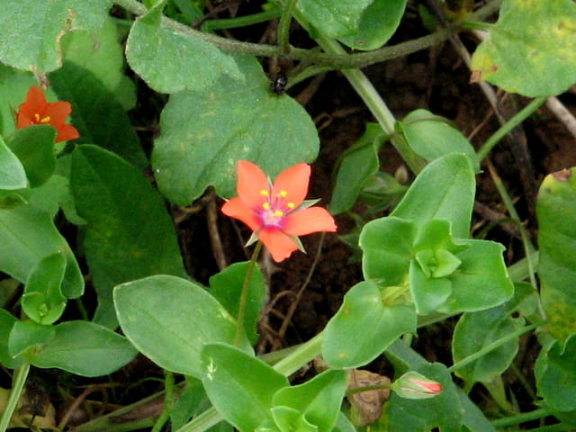 Petite fleur sauvage