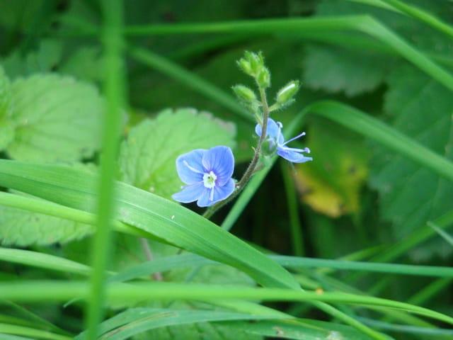 Petite fleur si fragile