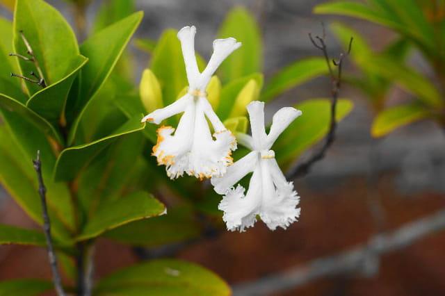 petite fleure du sud