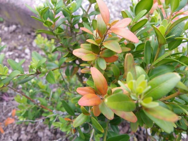 Petite plante aux feuilles colorées