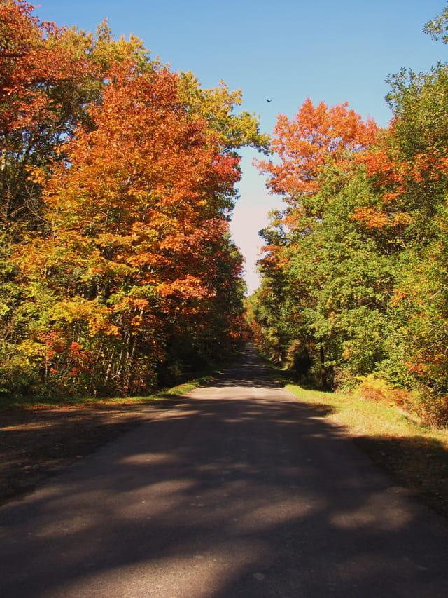 Petite route de campagne aux couleurs d'automne.