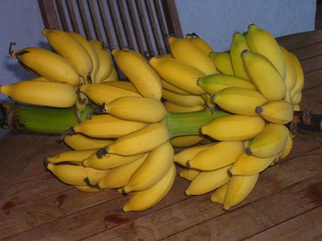 Petites bananes