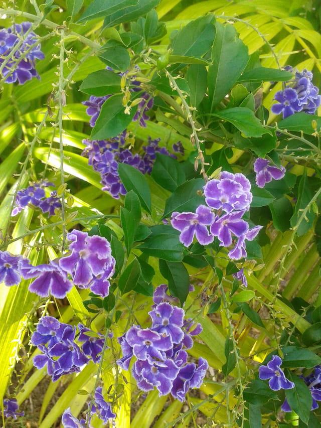 petites fleurs bleues par chantal sarrazin sur l 39 internaute. Black Bedroom Furniture Sets. Home Design Ideas