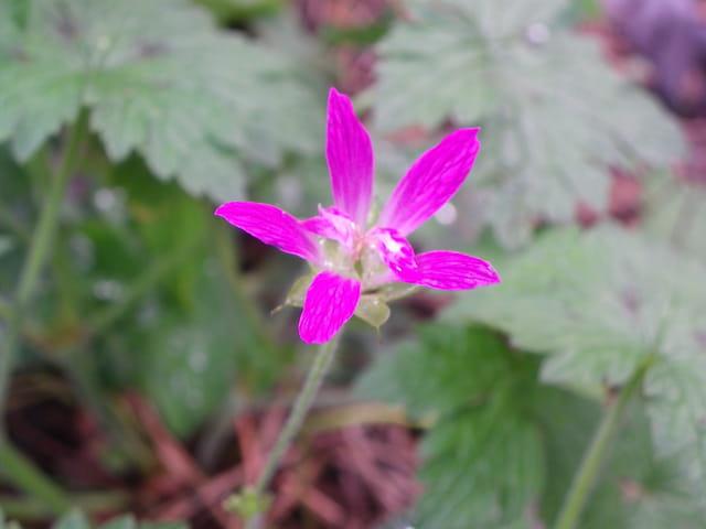 Petites fleurs colorées