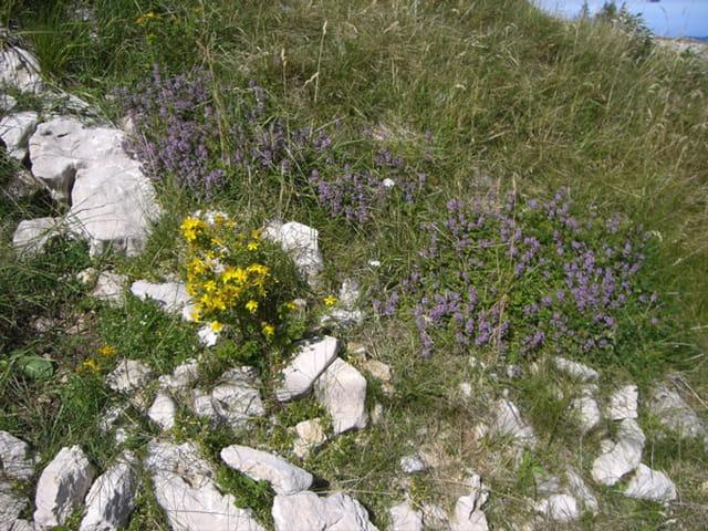 Petites fleurs dans les pierres