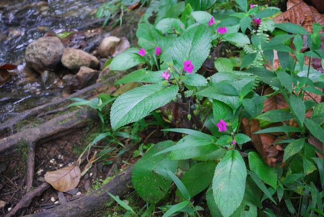 petites fleurs de la forêt tropicale humide