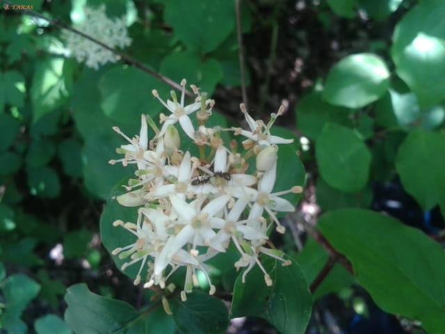 Petites fleurs discrètes