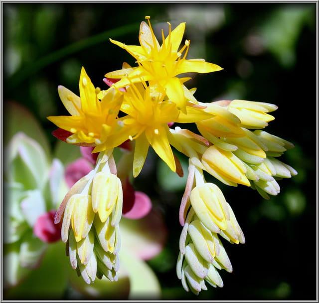 Petites plantes grasses