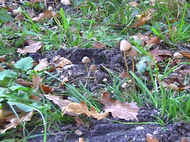 Petits champignons sauvages
