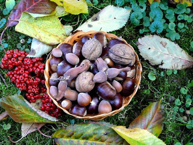 Petits fruits d'automne