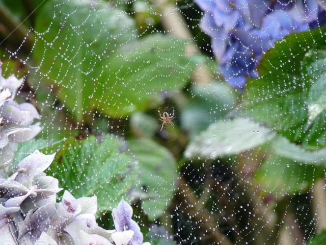 Pettite araignée et sa toile perlée
