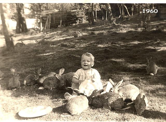 Philippe et les lapins