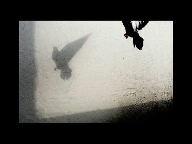 Pigeon vol 1