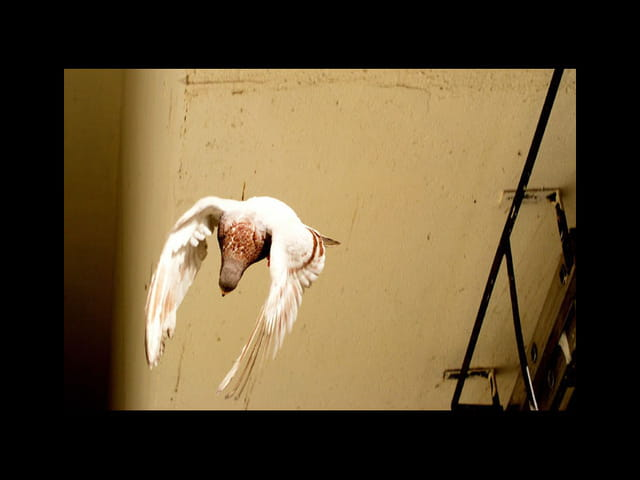 Pigeon vol 3