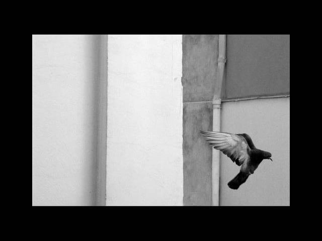 Pigeon vol2