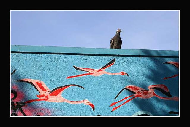Pigeon voyageur ?