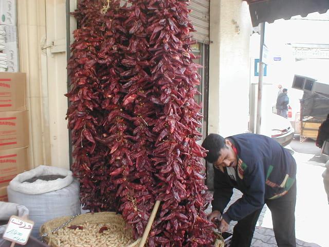 Piment de Tunis
