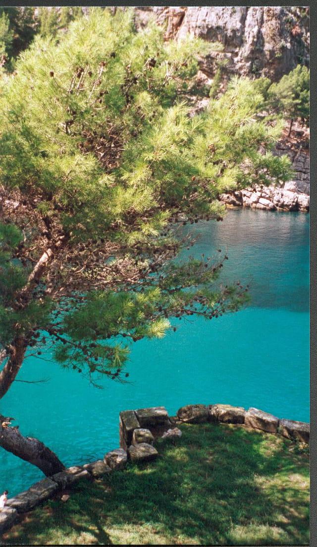 Pin sur mer Turquoise