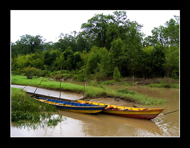 Pirogues sur la rivière Ouanary