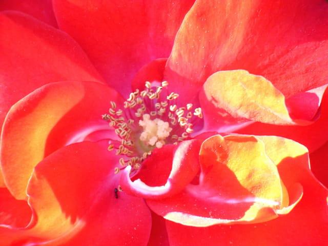 Pistil de fleur