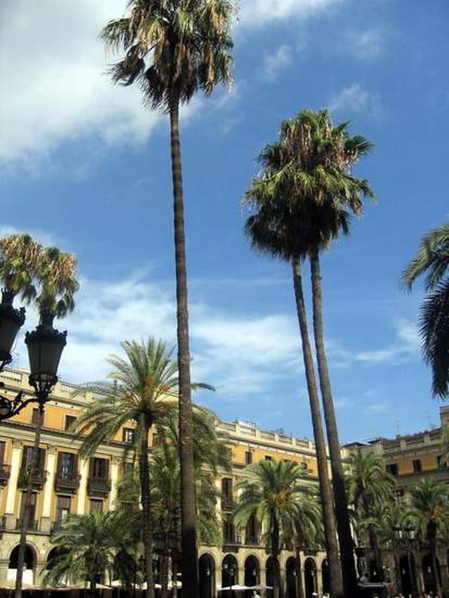Plaça real - barcelone