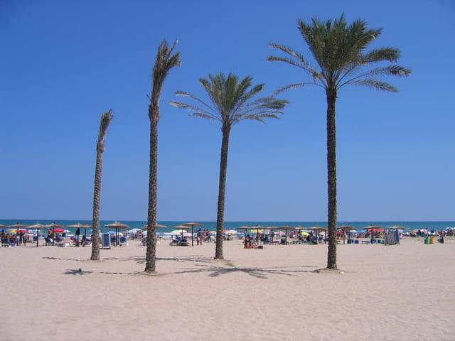Plage, midi, palmiers...