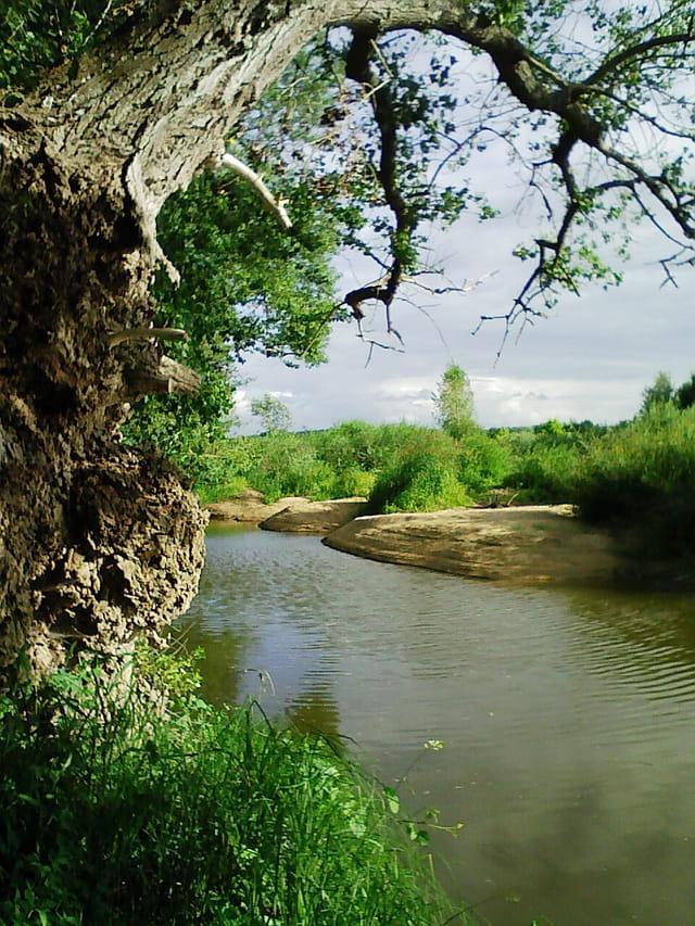 Plages du bord de Loire
