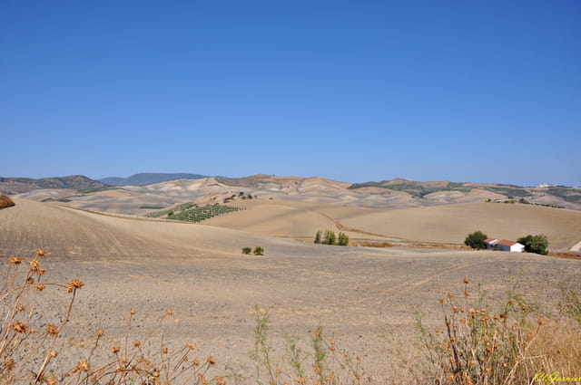 Plaines & collines