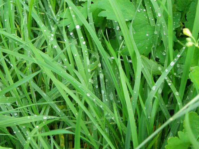 Plante sous la pluie