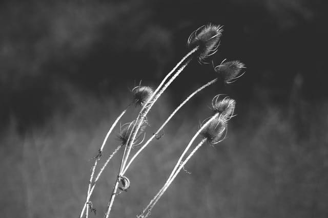 Plantes d'hiver noir et blanc