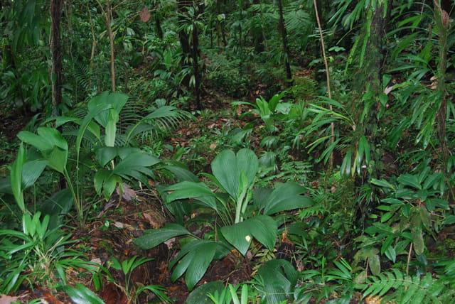 plantes de la forêt tropicale humide
