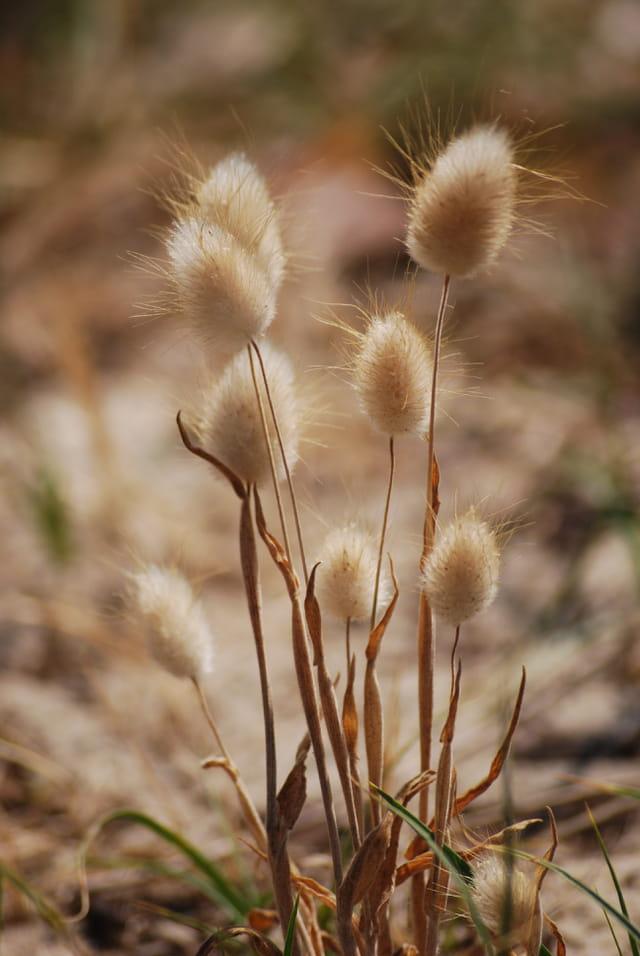 plantes des dunes de sable