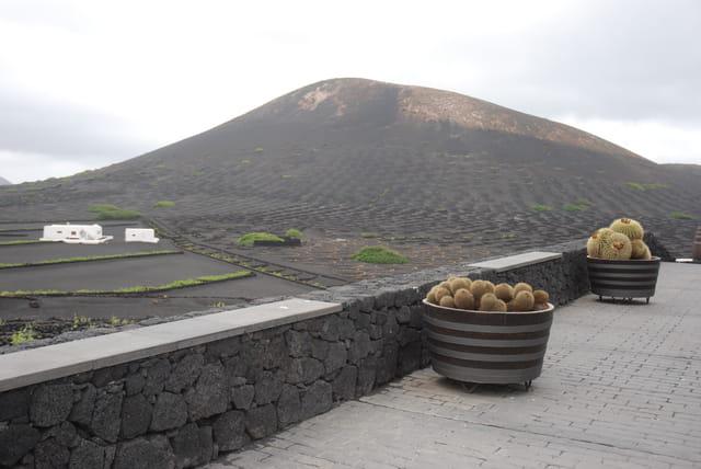 plantes grasses de Lanzarote