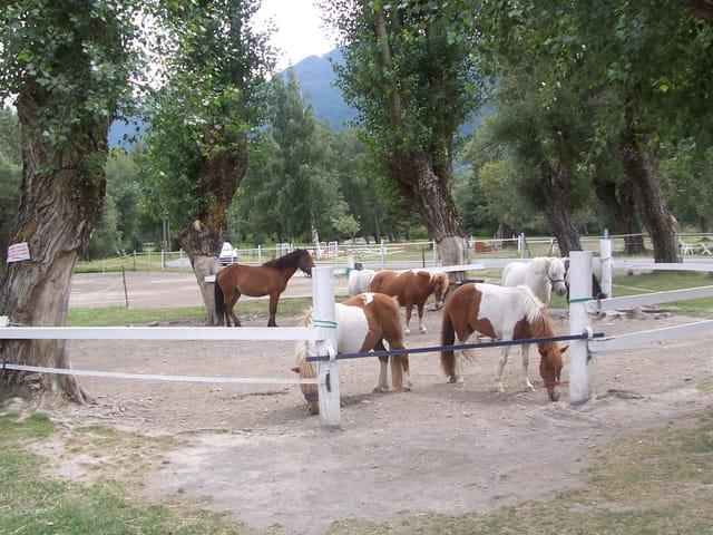 Plein de poneys