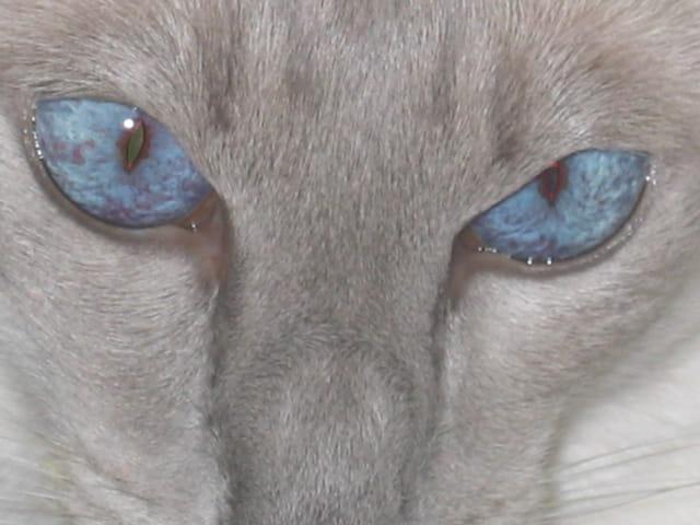 Plus bleu que tes yeux