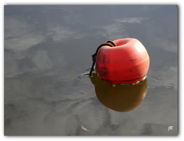 Pomme-amarre...