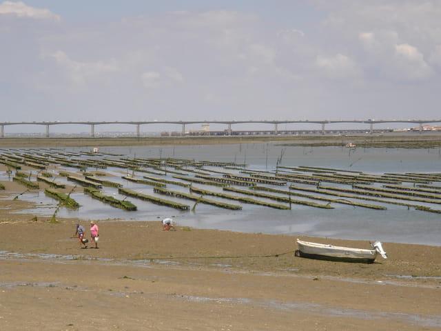 Pont Oleron à marée basse
