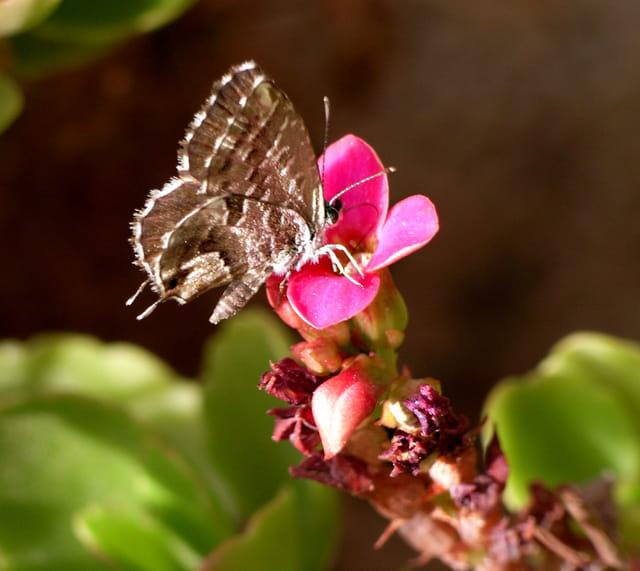 Porte-queue sur fleur