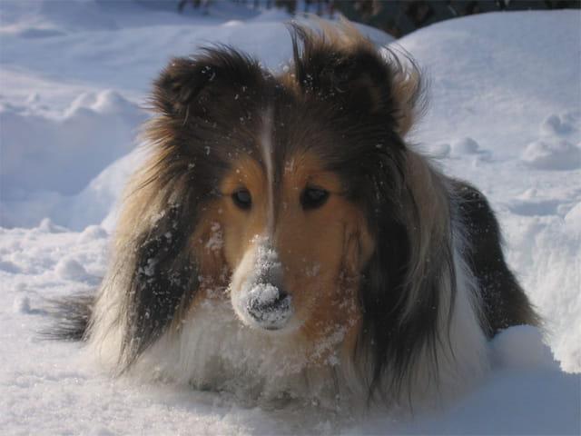Porto dans la neige