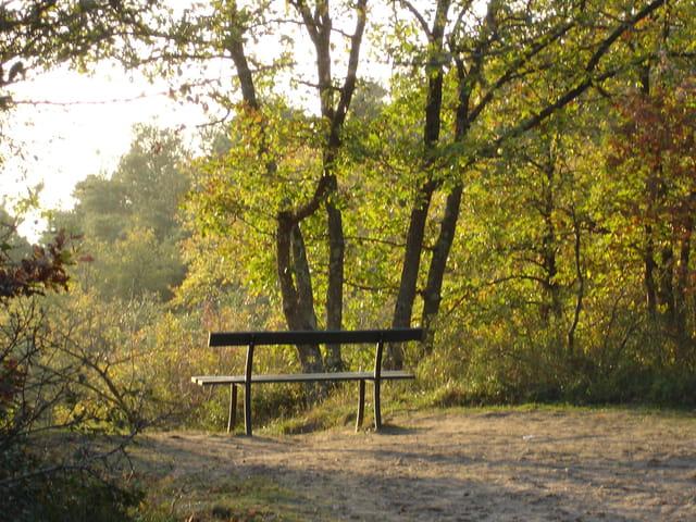 Pose en forêt