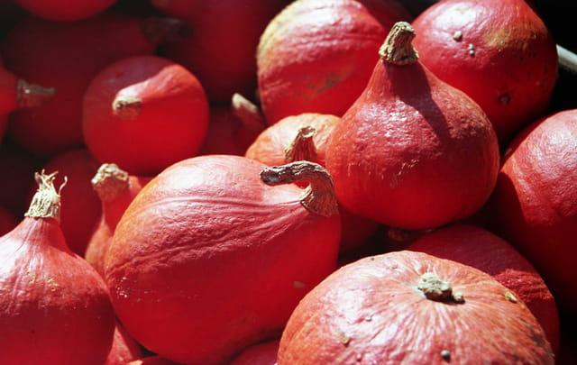 Potirons rouges