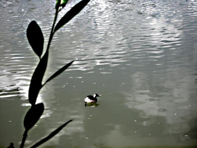 Reflets dans les eaux du lac