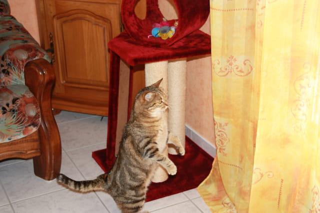 Poupousse mode suricat