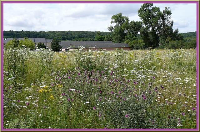 Prairie fleurie près de la berge de l'Iton - 1