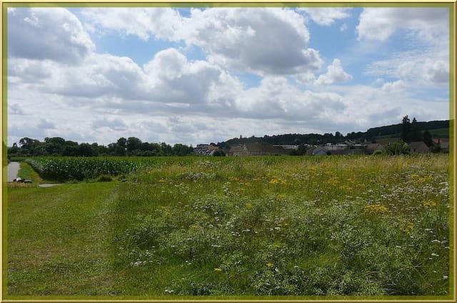 Prairie fleurie près de la berge de l'Iton - 2