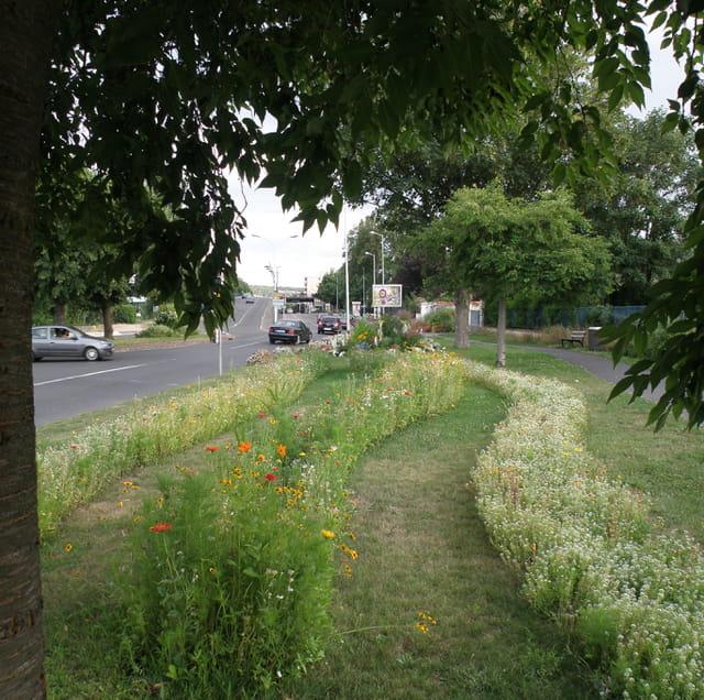 Prairie urbaine (2), au Pecq