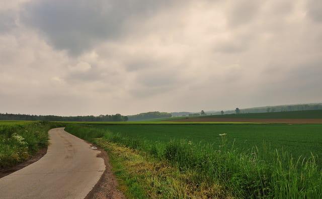 Prairies et champs