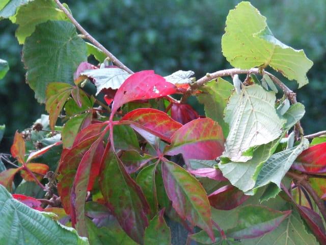Prélude d automne